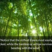 Enhancing Emotional Flexibility for Gaining Inner Strength